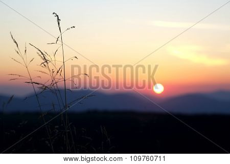 Sunset In The Sky On The Background Of Grass