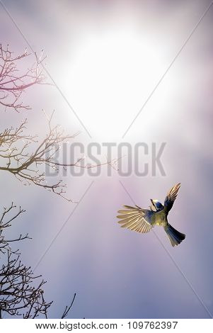 Bird In Flight Against Bright Sky