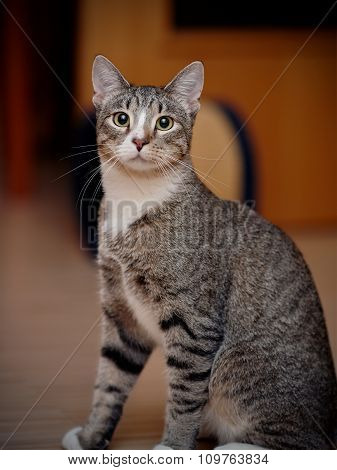 Portrait Of A Domestic Striped Cat