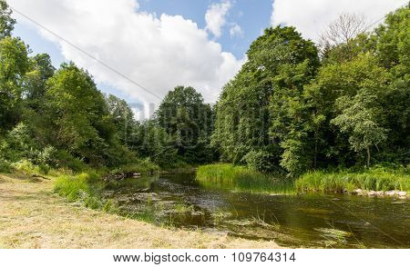 nature, season and environment concept - summer forest and river