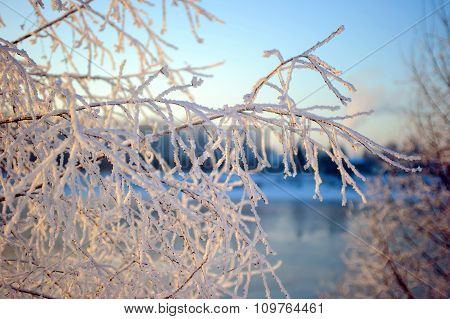 Frost on the trees, rime on the branches in winter.