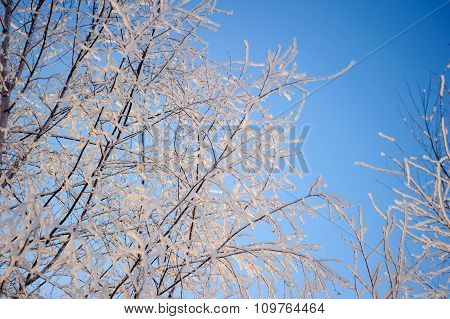 Rime on the branches in winter
