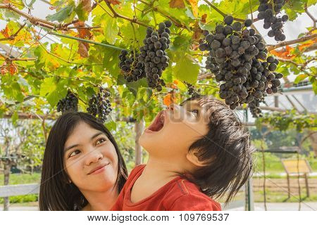 Young Mother Woman With Son In Grapes Vineyard