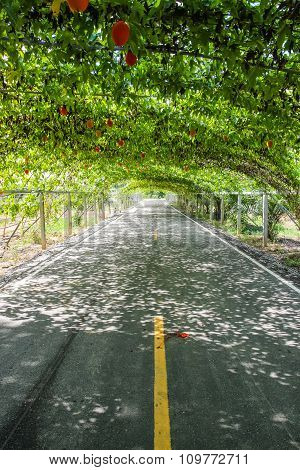 Tree Natural Tunnel On Asphalt Road