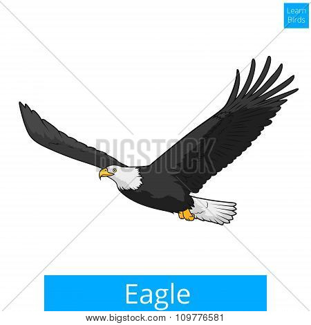 Eagle learn birds educational game vector