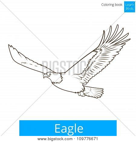 Eagle learn birds coloring book vector