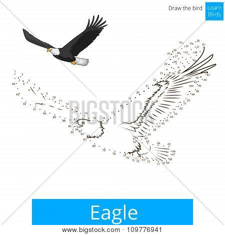 Eagle bird learn to draw vector