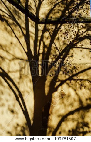 Beautiful Shadows Of Tree On The Church Wall