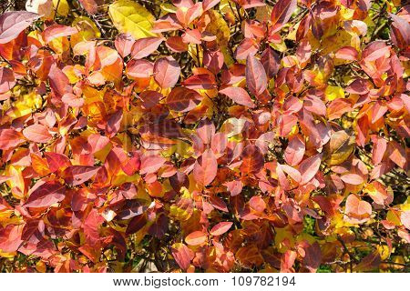 Yellow, Red And Orange Leaves
