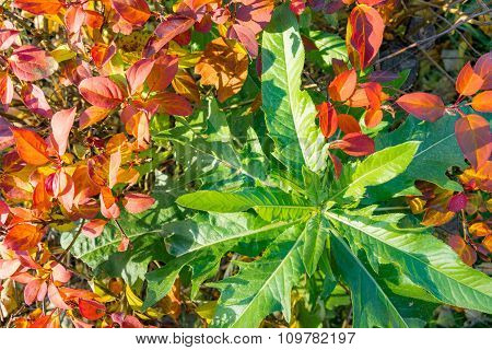 Yellow, Orange And Green Leaves