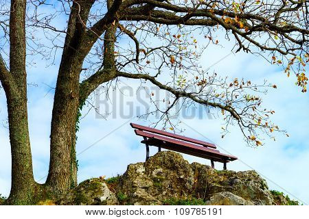 Single Loneliness Bench Over The Tree, Autumn Concept
