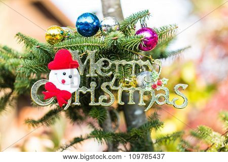 Joyful Ornament  Of Christmas Tree In Garden