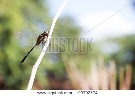 Dragonfly outdoor.