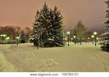 Romantic Walk In A Winter Park At Night.