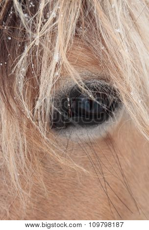 Close Up Of Mare Face