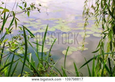 Abstract blurred background with lily pads on the surface of a pond.