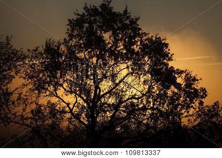 Silhouette Of Tree Sun Rising In Foggy Sky
