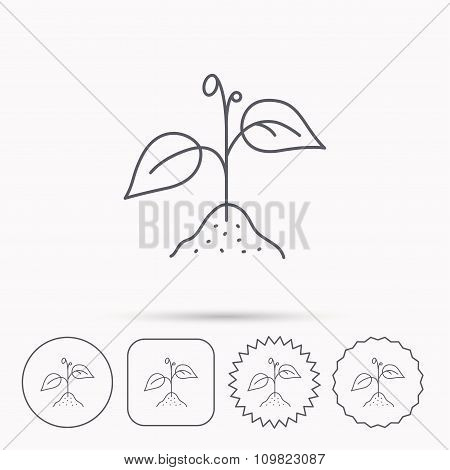 Plant with leaves icon. Agriculture sign.