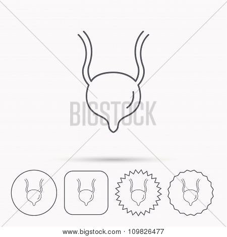 Urinary bladder icon. Human body organ sign.