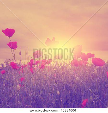 Vintage photo of poppy field at sunset.