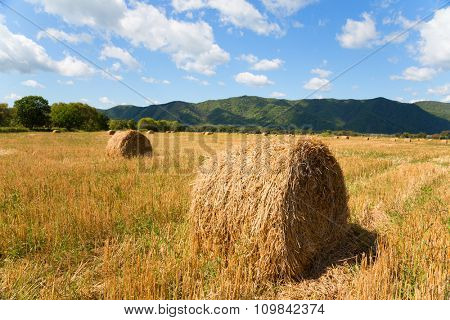 Haystacks in the field in autumn. Far East, Russia.