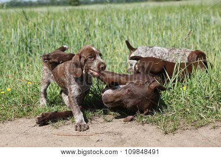 Amazing dog Playing With Its Puppies