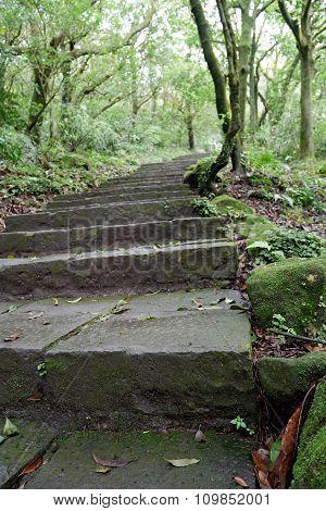 Hiking trail in Yangmingshan National Park