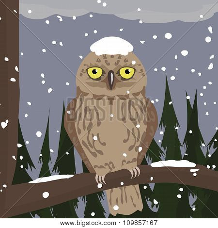 owl at winter woods