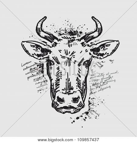 head cow. vector illustration
