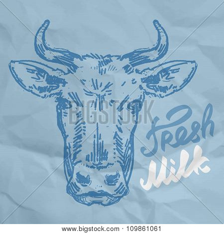 head of the cow. sketch. vector illustration
