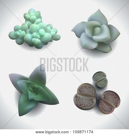 succulents-set