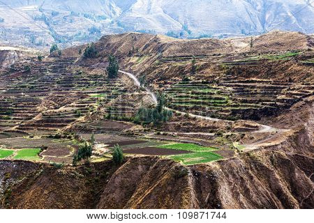 terraces and the road in the Andes