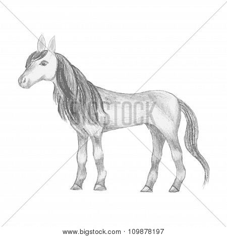 Hand drawn horse, pencil drawing of mare