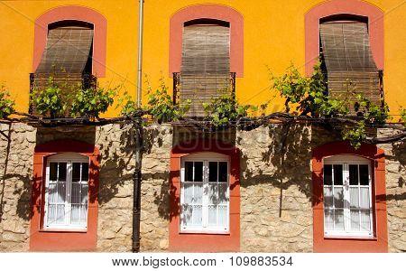 Trained Vine On Street Facade, Banos De Montemayor