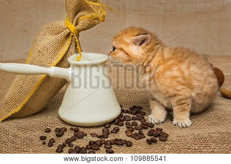 Little Kitten And Ingredients For Coffee