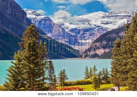 Flowers on the banks of mountain Lake Louise. Emerald lake is surrounded by mountains, glaciers and pine forests. Banff National Park, Rocky Mountains, Canada
