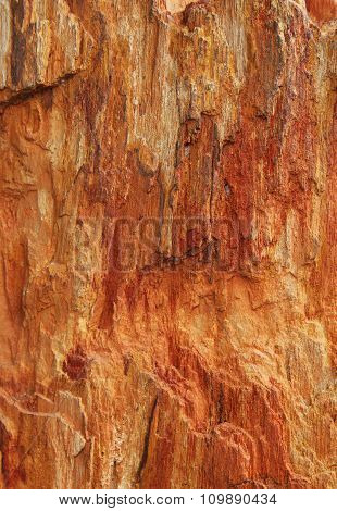 Closeup Of Textured Colorful Petrified Tree As A Background