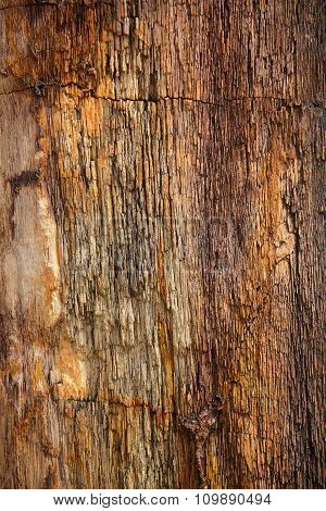 Closeup Of Petrified Tree Trunk As A Textured Colorful Background