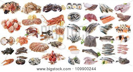 Seafood Fishs And Shellfish