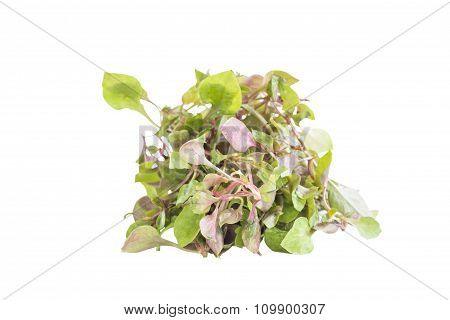 Red Green Watercress Salad Ingredient