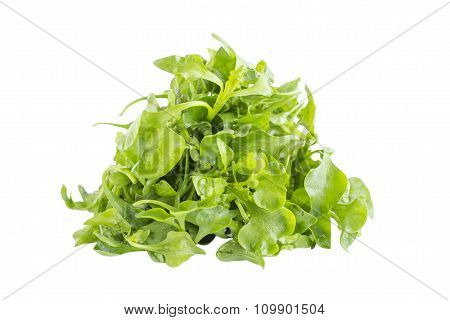 Fresh Green Watercress Salad Ingredient