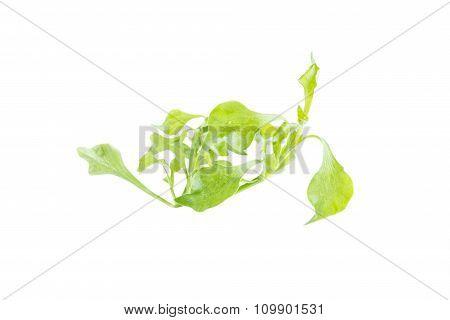Fresh Green Watercress Vegetable Nutrition