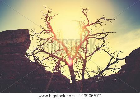 Vintage Toned Silhouette Of A Lonely Dry Tree At Sunset.