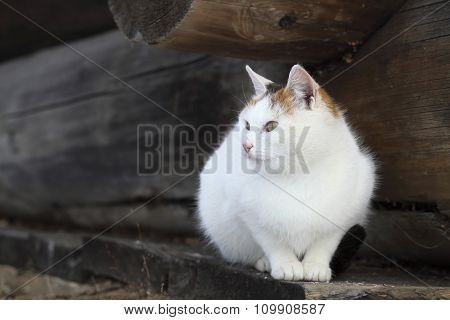 cat lying on old wooden board