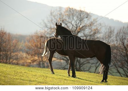Mare and young horse on pasture
