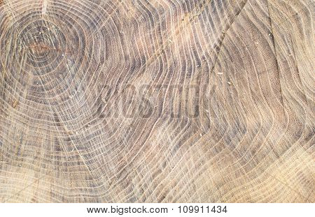 Top View Of The Surface Of The Fresh Stump With Annual Rings
