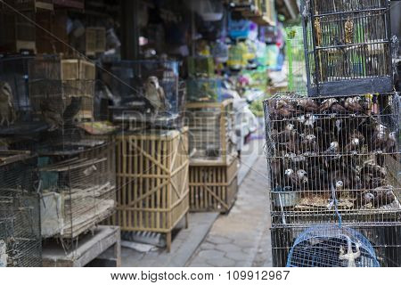 Birds And Parrots At The Pasar Ngasem Market In Yogyakarta, Central Java, Indonesia.