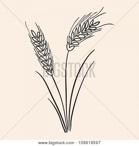 Rye Ear Illustration