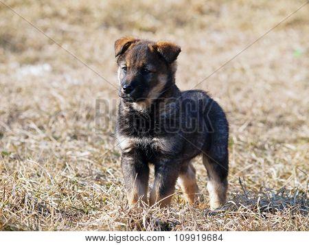 Portrait grey puppy