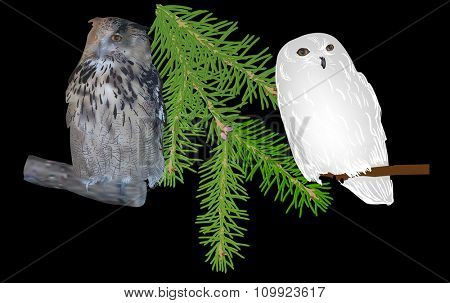 illustration with two owls isolated on black background